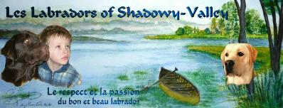 Les Labradors of Shadowy Valley